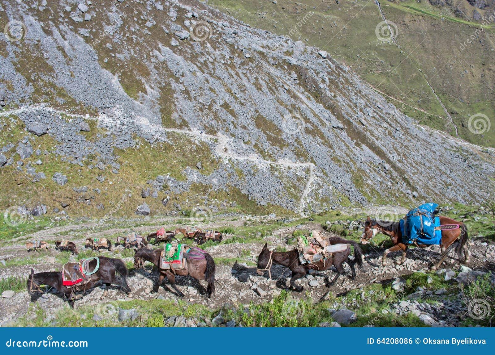 Caballos en los Andes perú