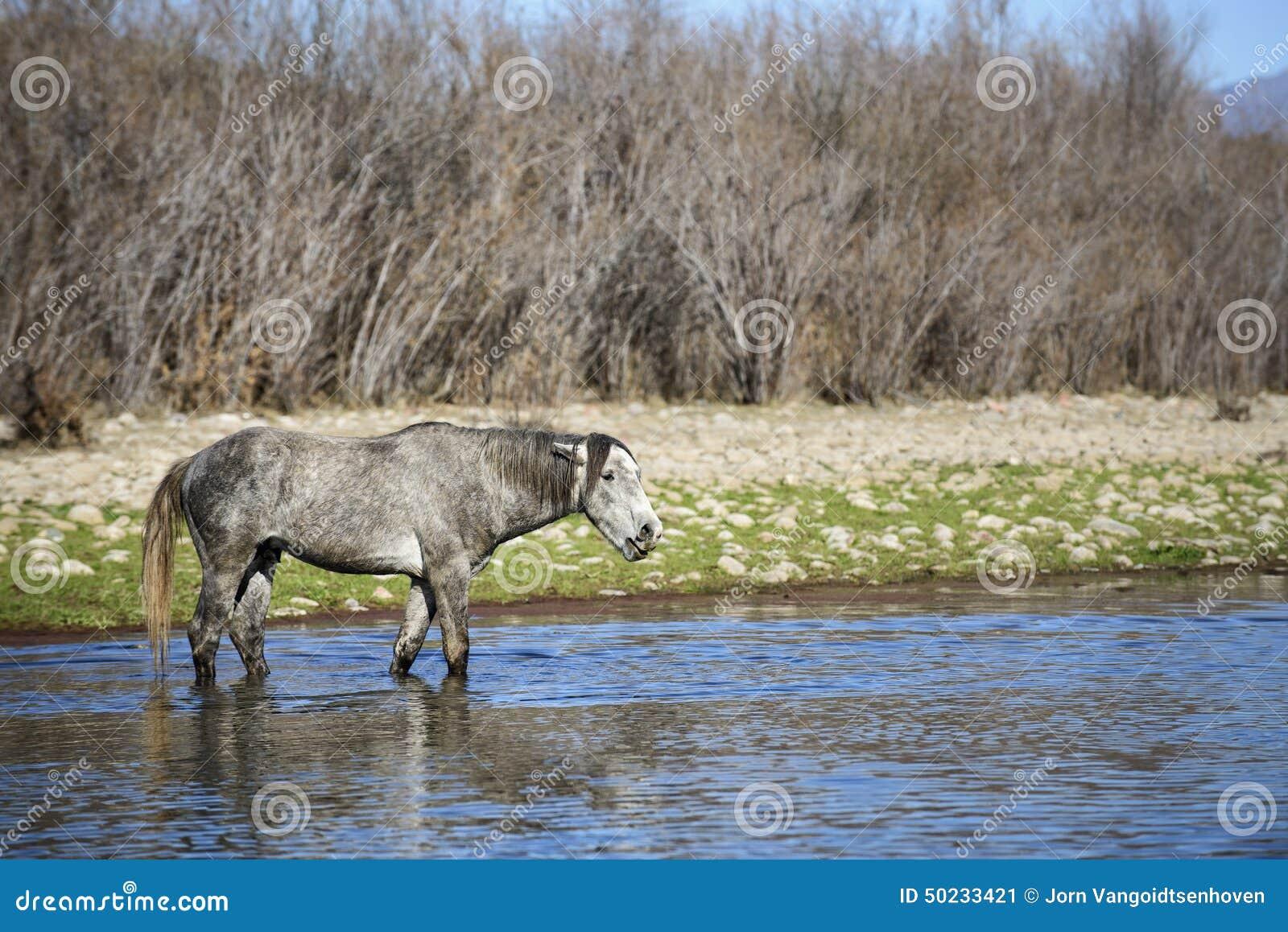 Caballos salvajes del río Salt