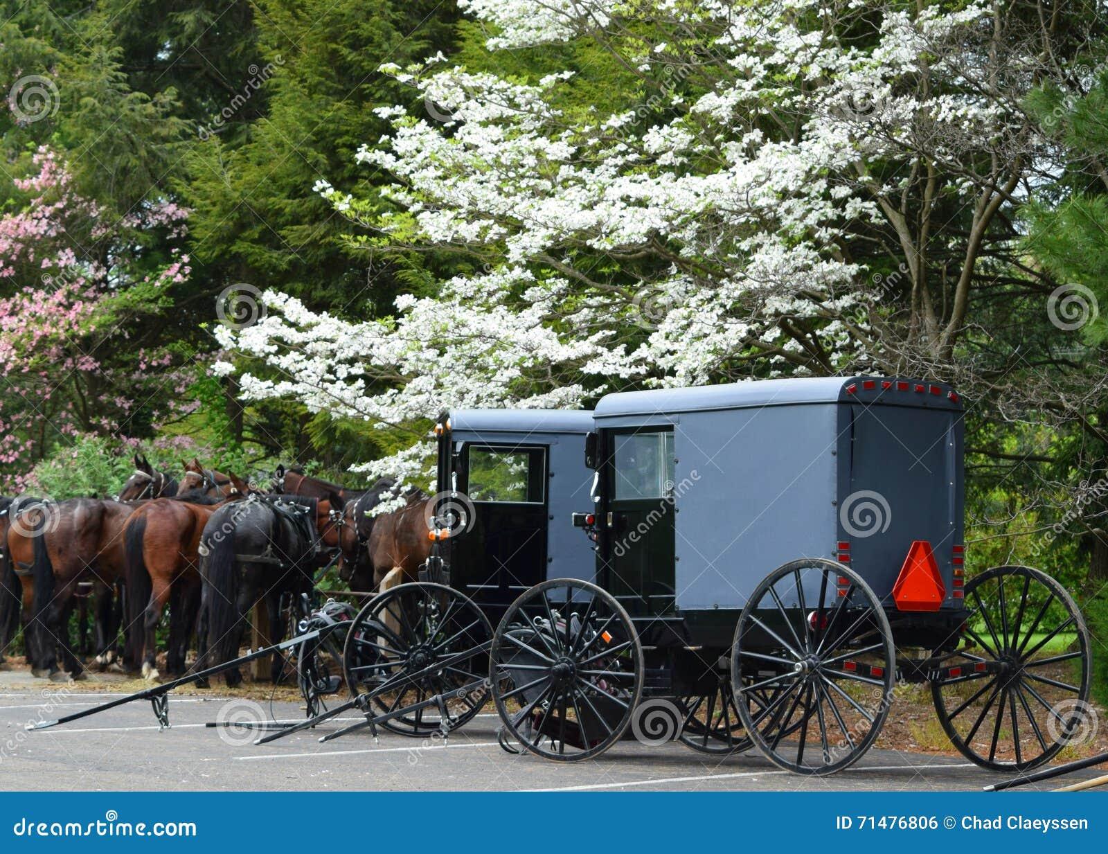 Caballos y cochecillos de Amish en Lancaster, PA