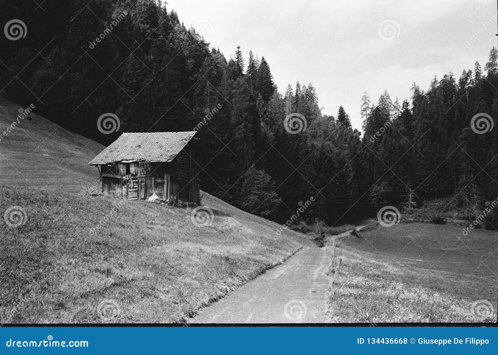 Cabanas velhas do log para os abrigos animais nos cumes suíços, com photgraphy análogo - 2