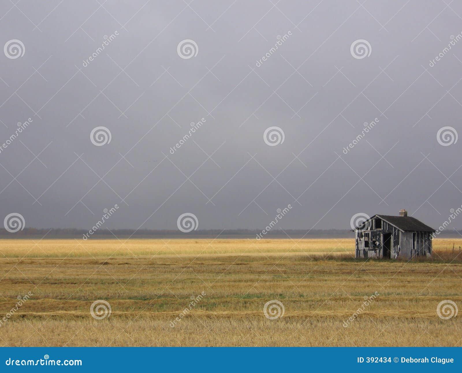 Cabane abandonnée dans le domaine d or