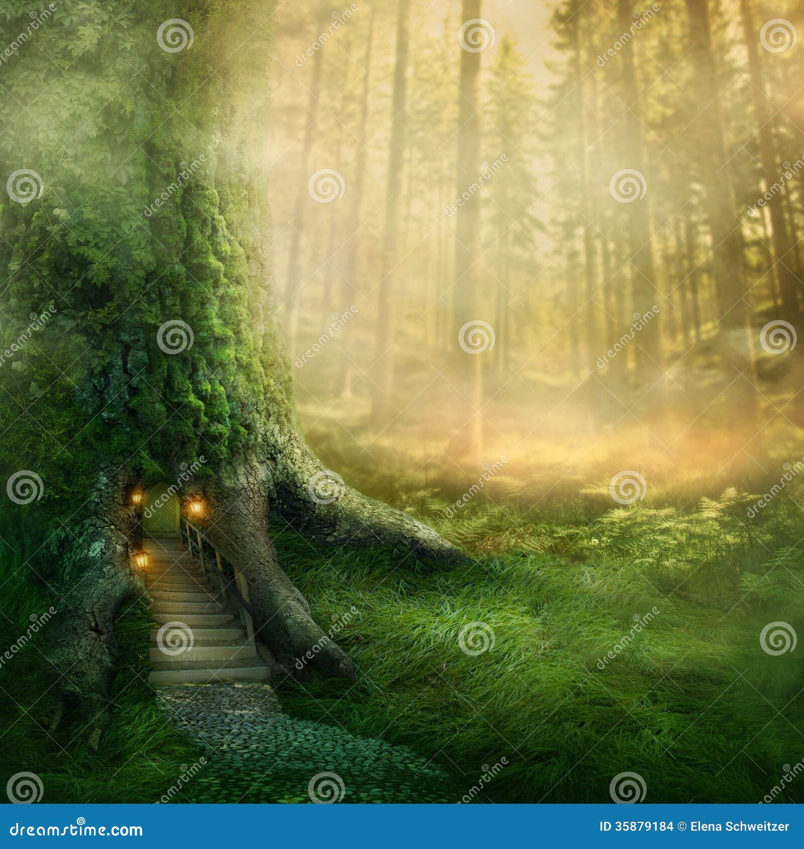 Cabane dans un arbre d imagination