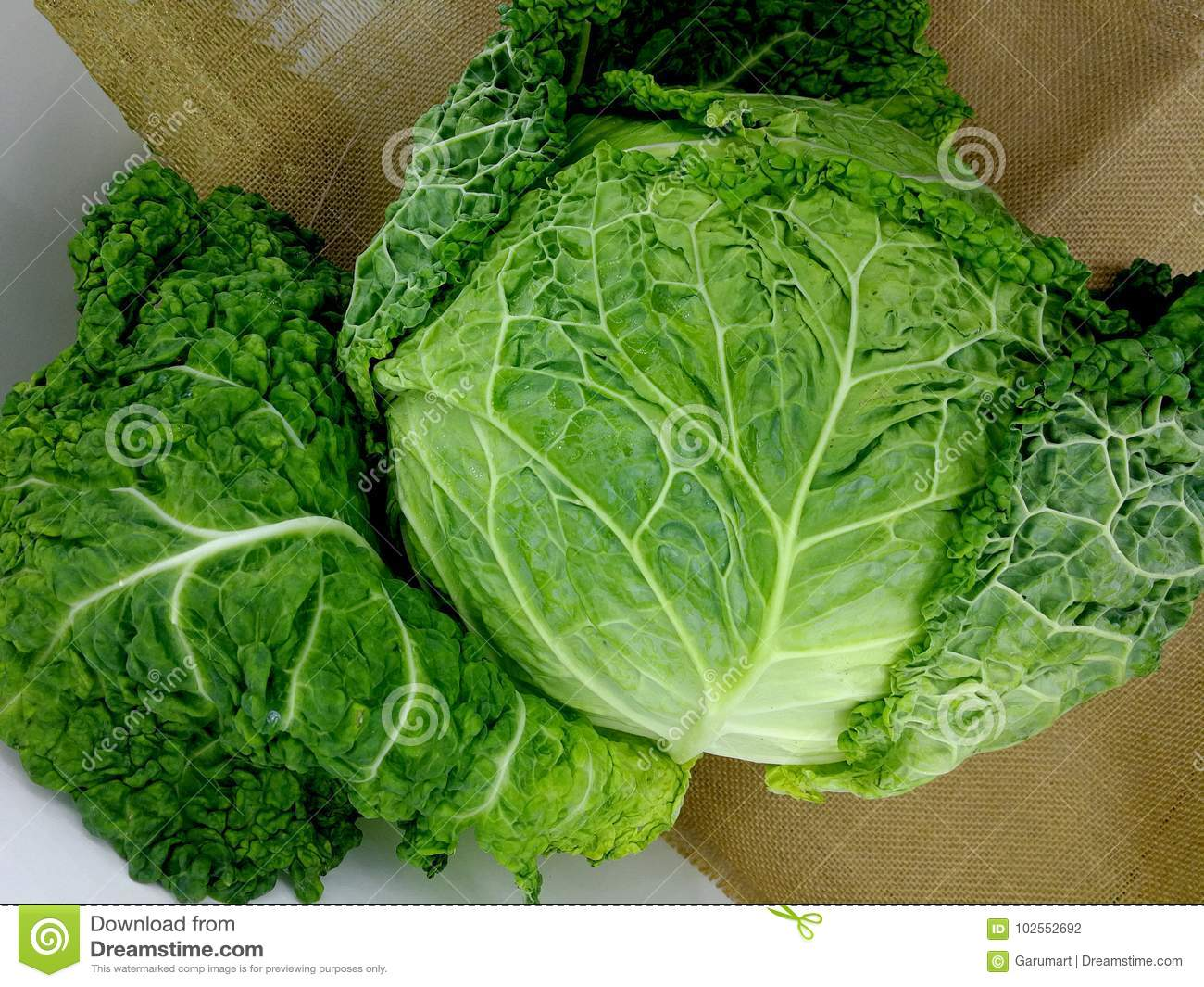 Cabbage with curly leaves