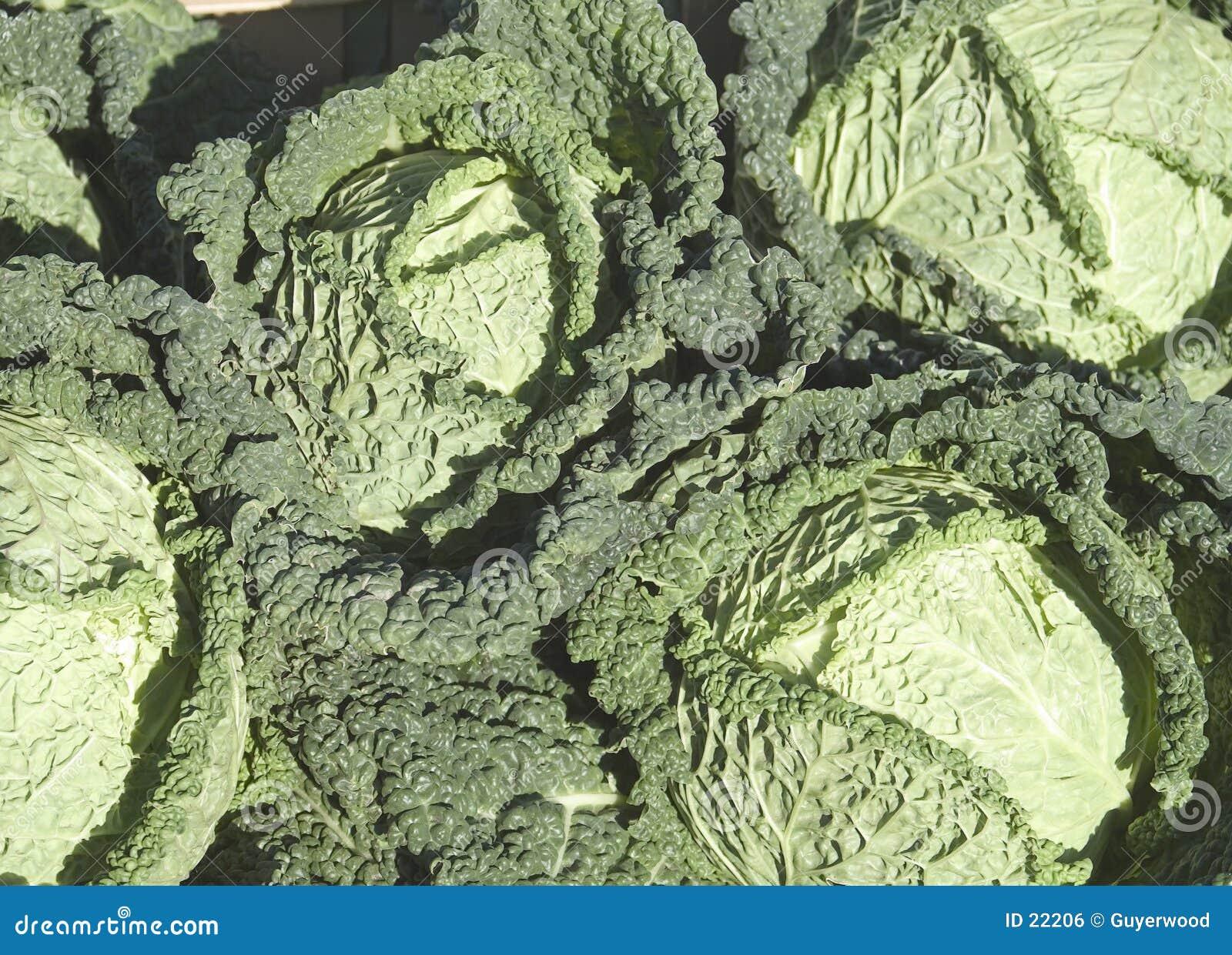 Cabbages (savoy type)