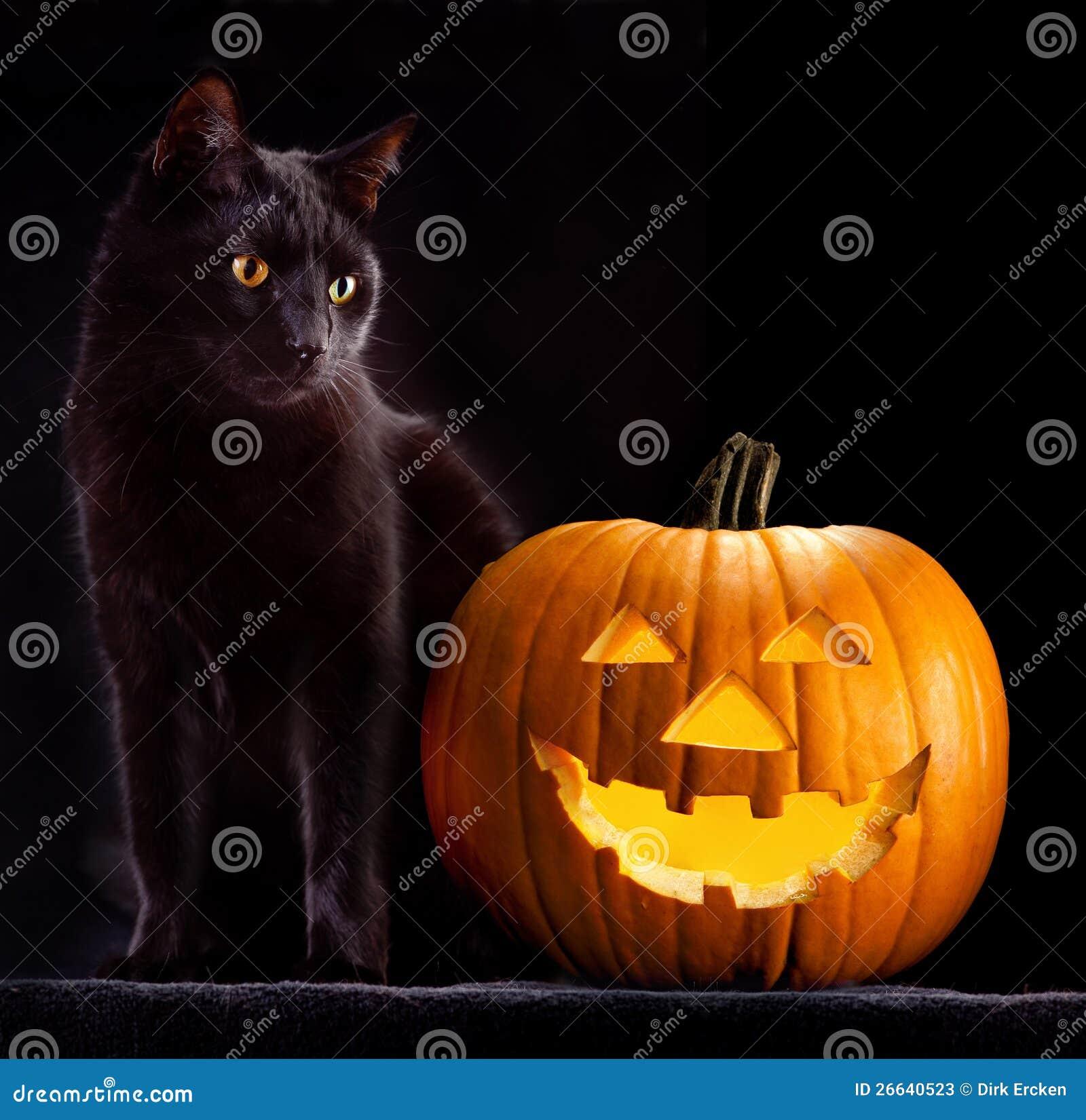 Cabeça da abóbora de Halloween e gato preto