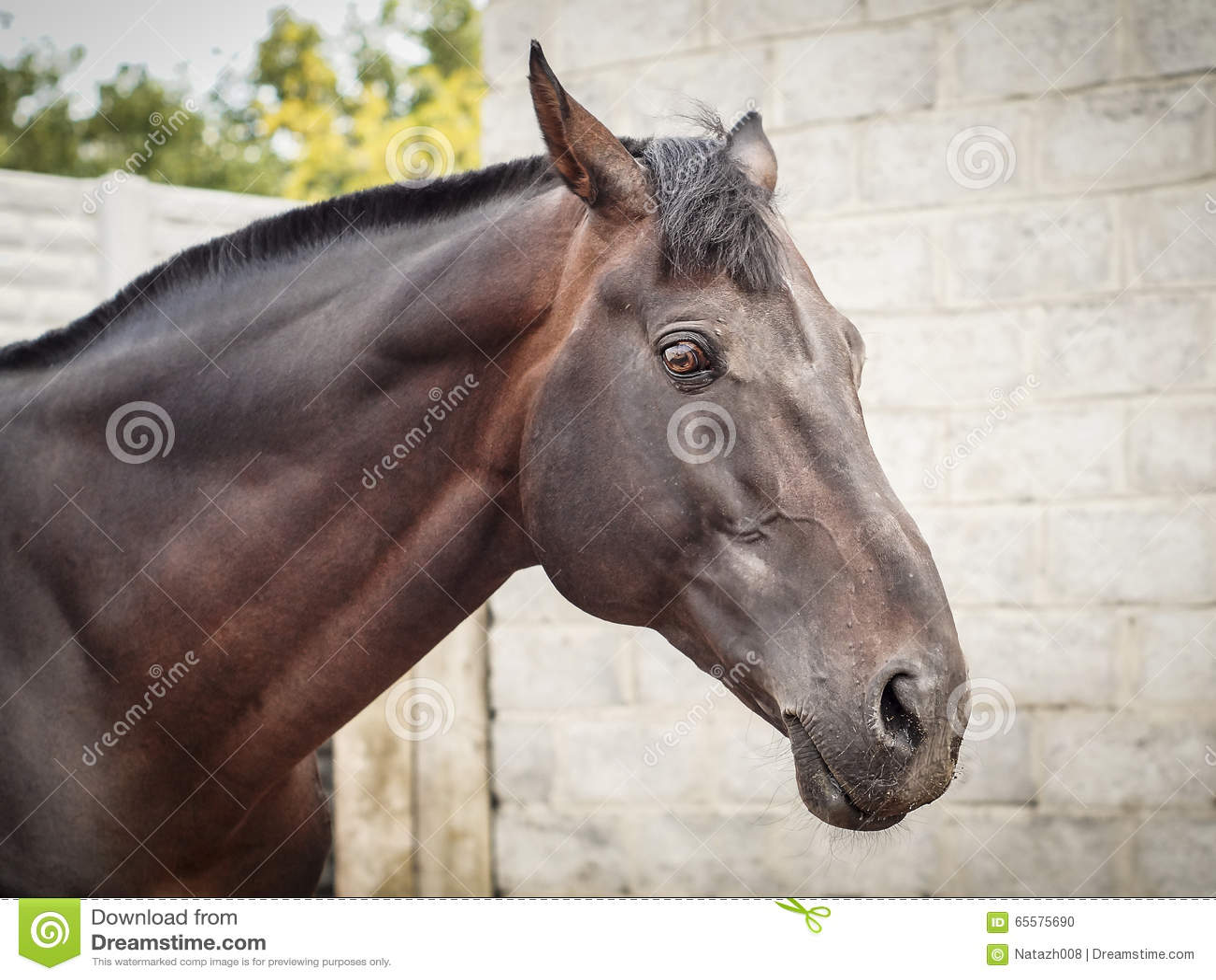 Cabeça de cavalo de Brown