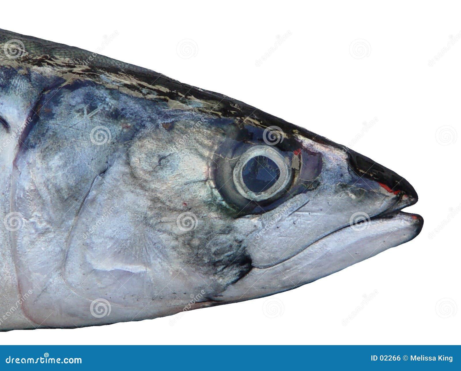 Cabeça dos peixes