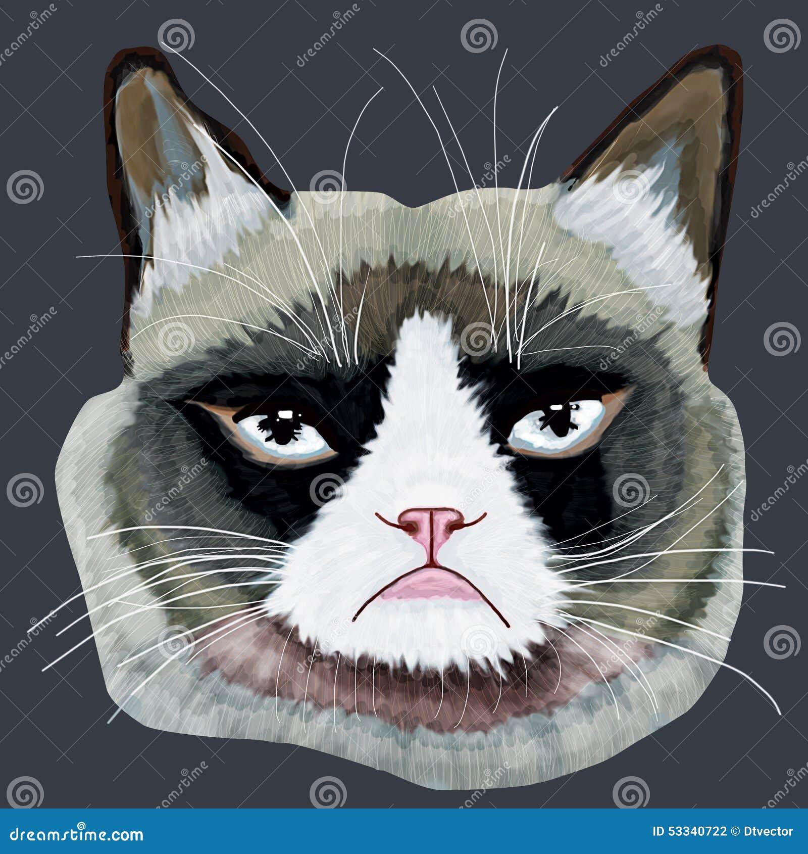 Cabeça mal-humorada do gato