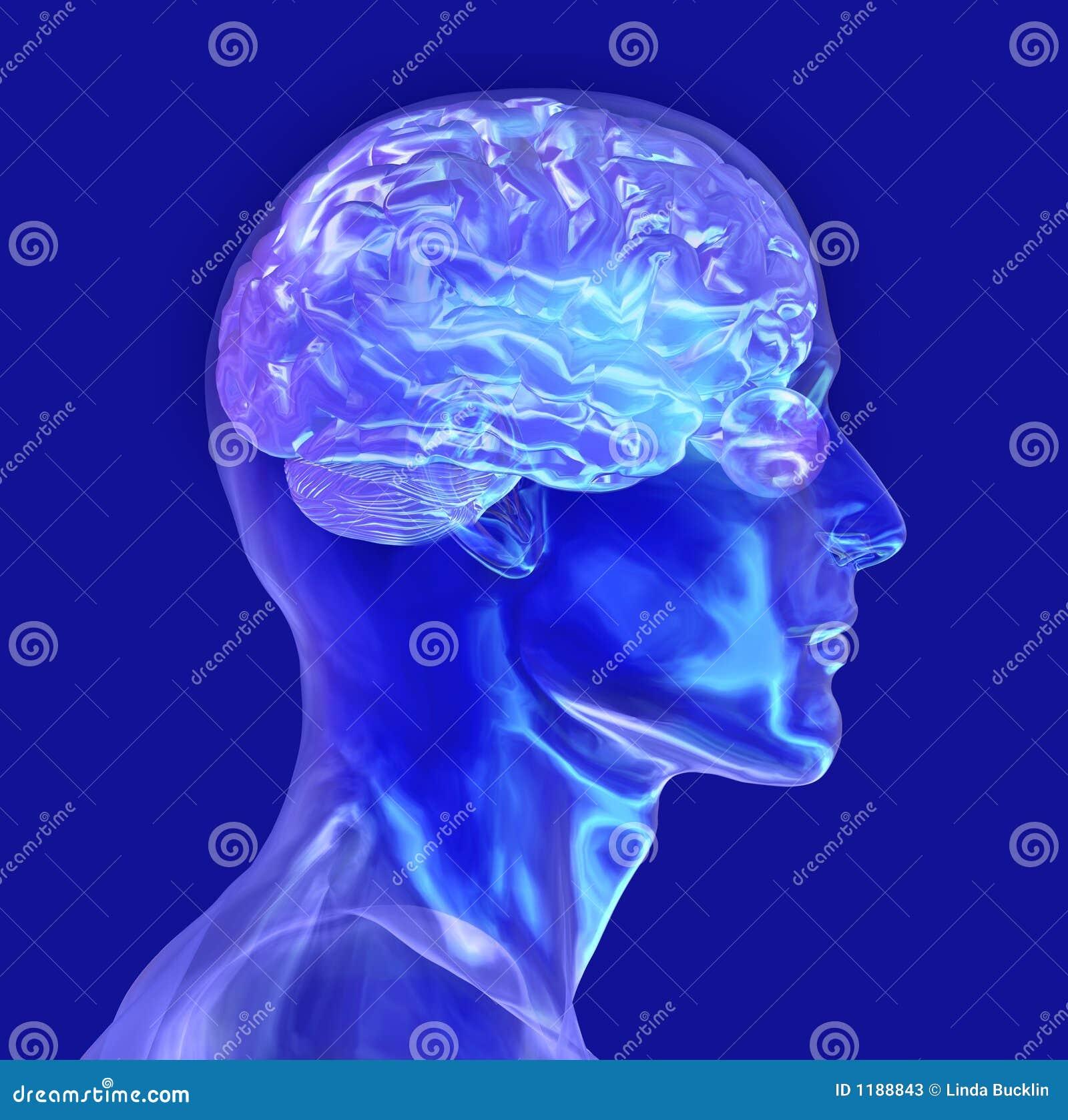 A cabeça masculina de vidro com cérebro - inclui o trajeto de grampeamento
