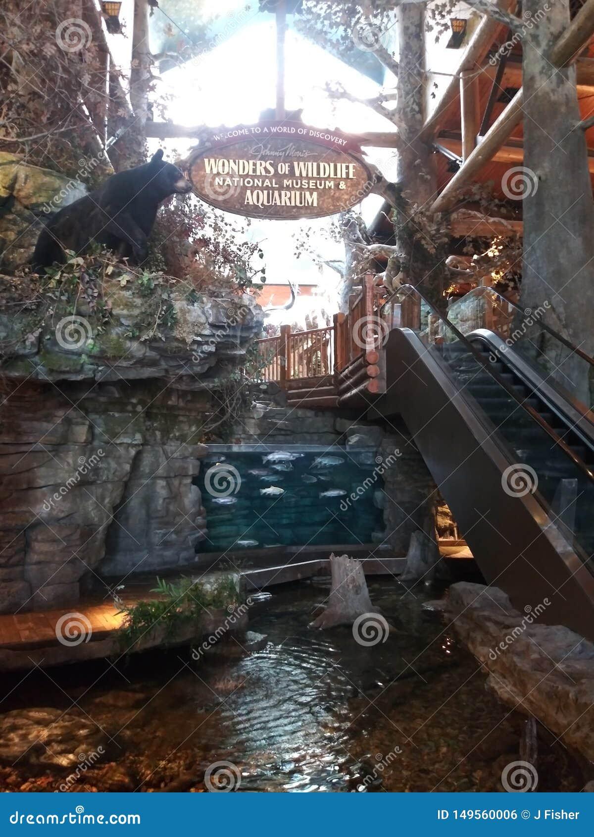 Cabela& x27; entrada del museo de la fauna de s