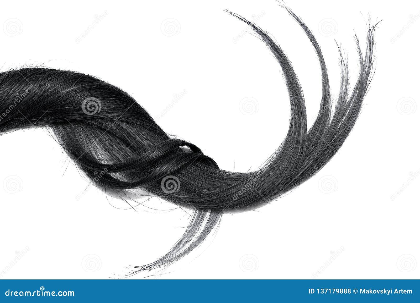 Cabelo natural preto, isolado em um fundo branco