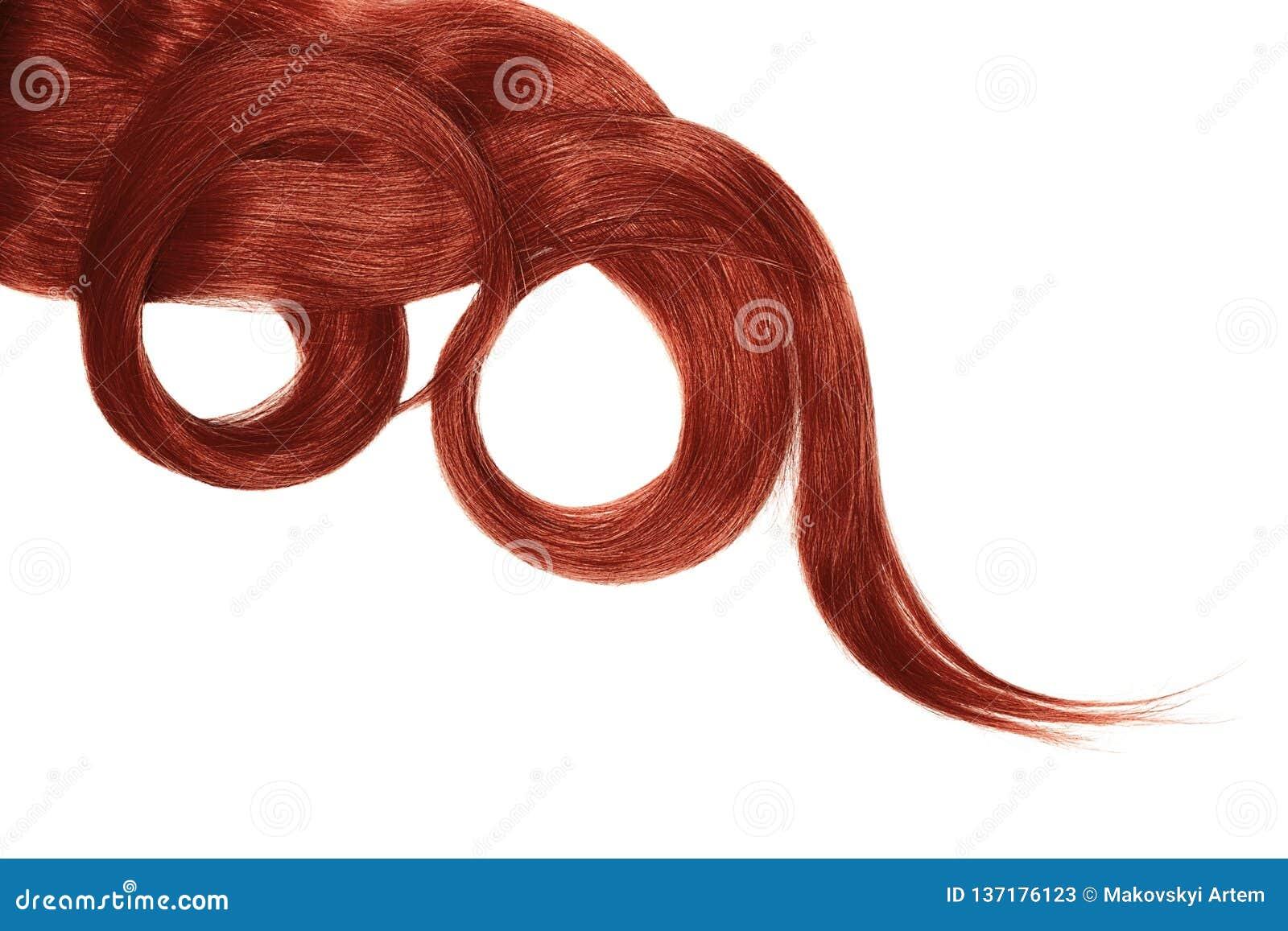 Cabelo vermelho isolado no fundo branco Rabo de cavalo bonito longo na forma do círculo