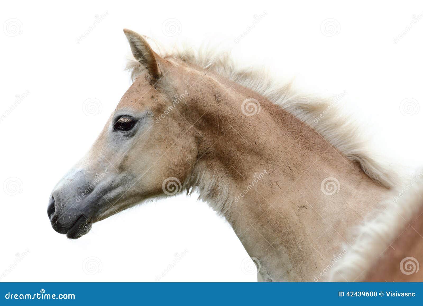 Cabeza de caballo en un fondo blanco