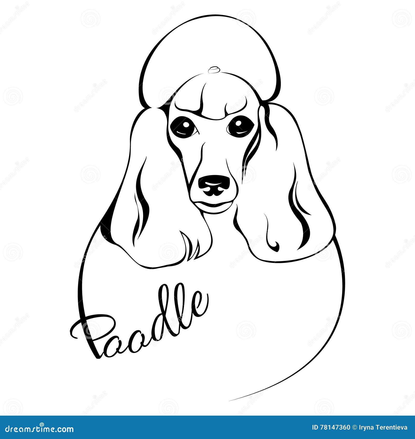 Cabeza De Perro De Caniche Ilustración Del Vector Ilustración De