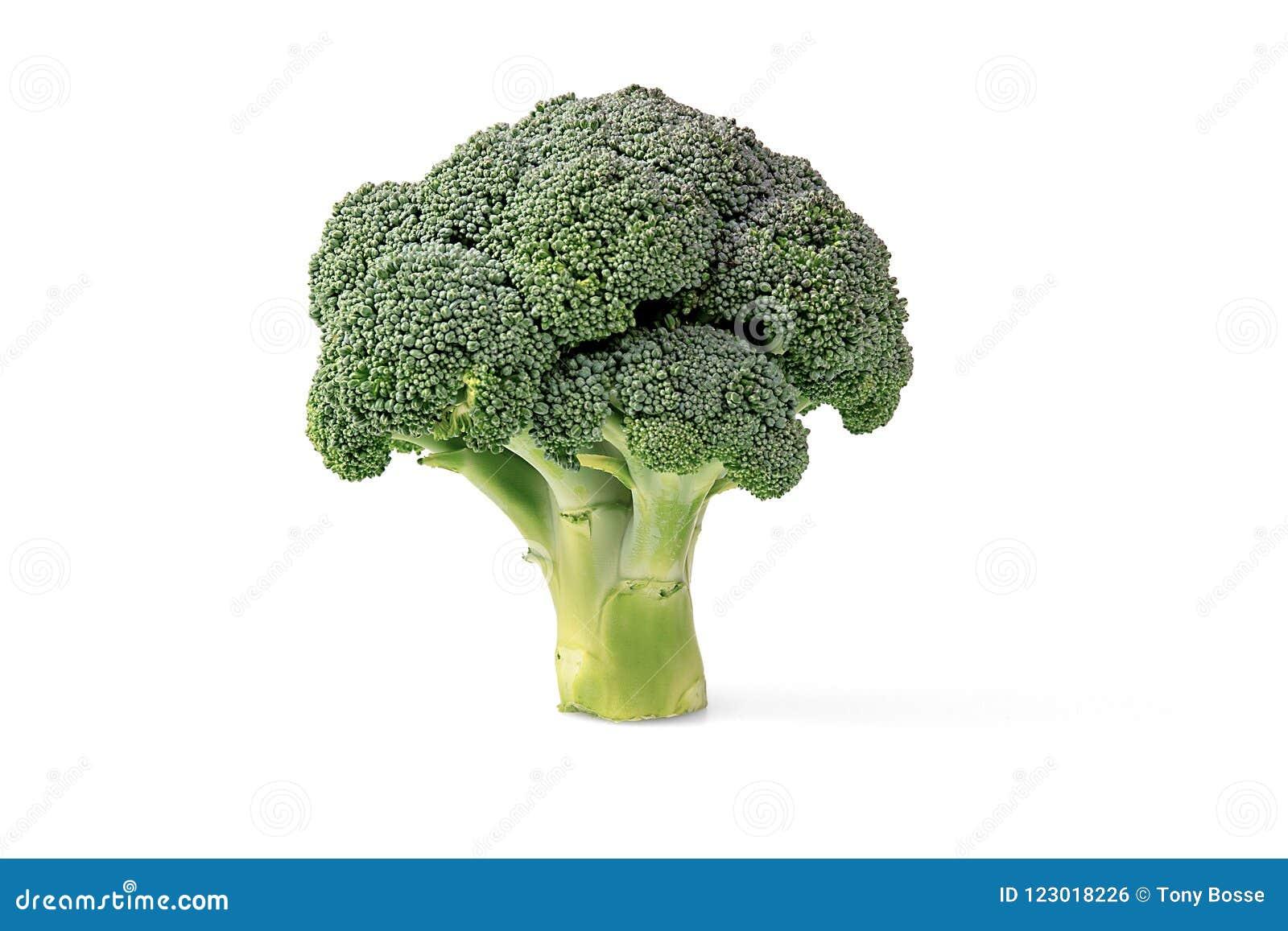Cabeza del bróculi en un fondo blanco