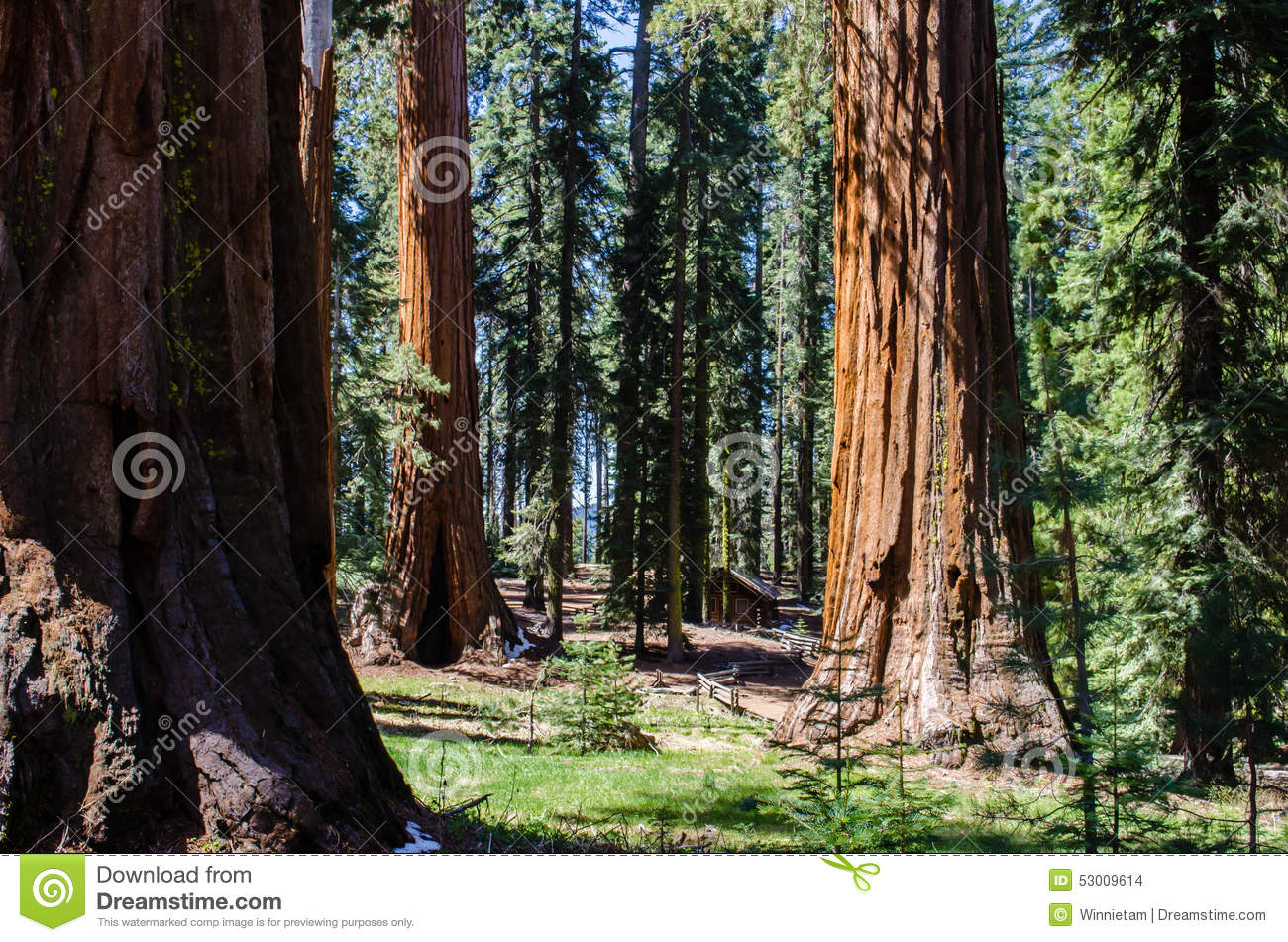 Cabin in the woods stock photo image 53009614 for Log cabin sequoia national park