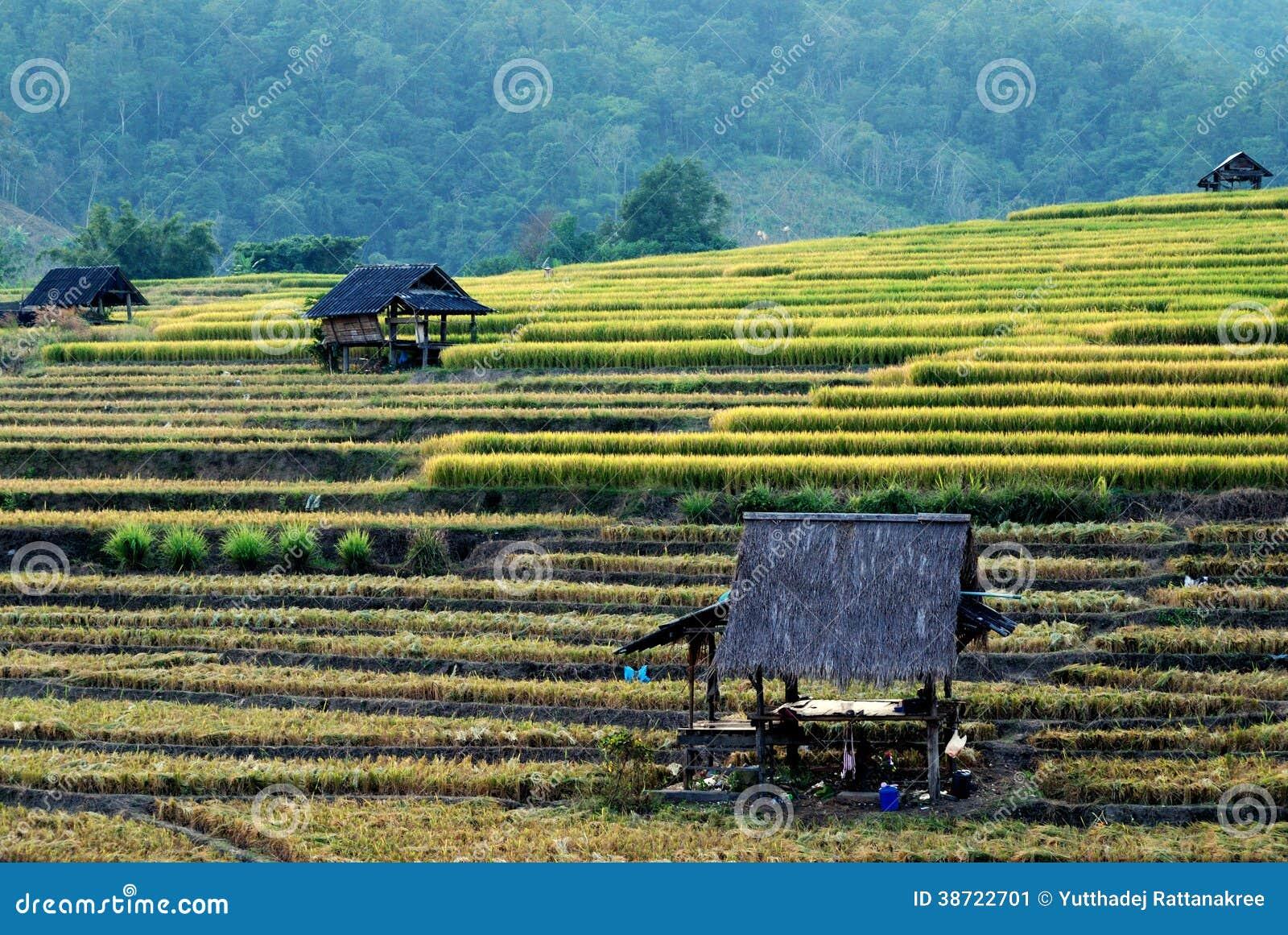 Cabina vieja en campos del arroz