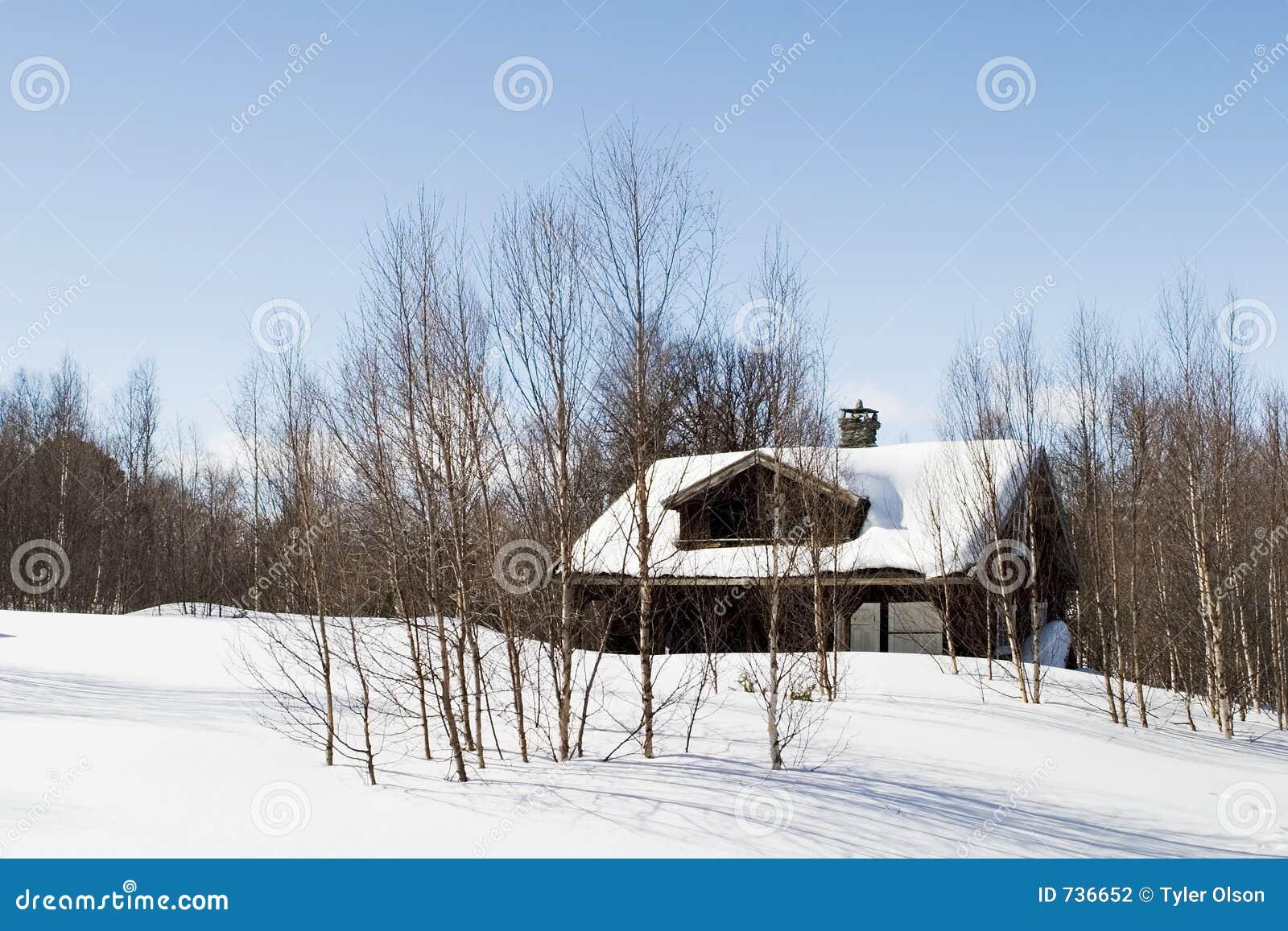 Cabine de forêt de l hiver