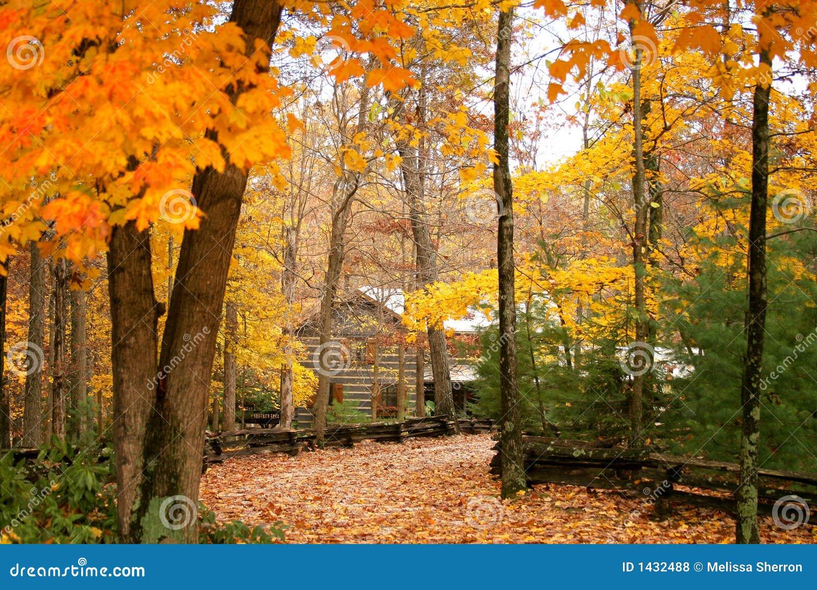 Cabine nas madeiras com outono