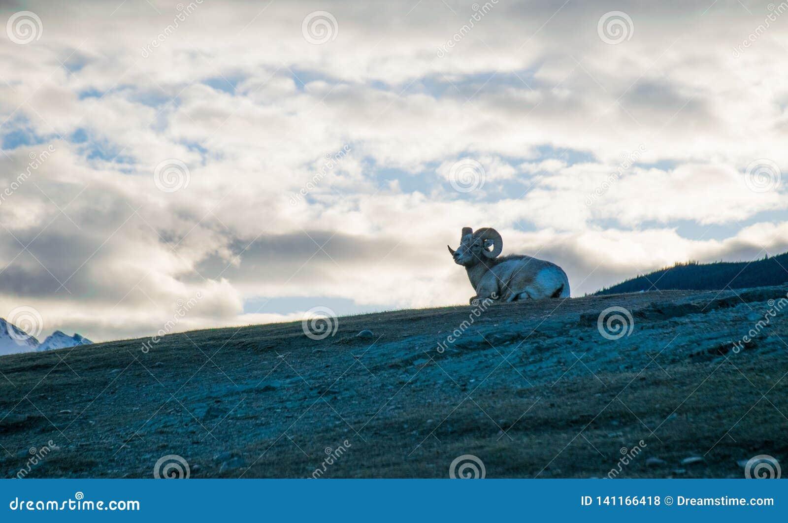Cabra encima de la montaña