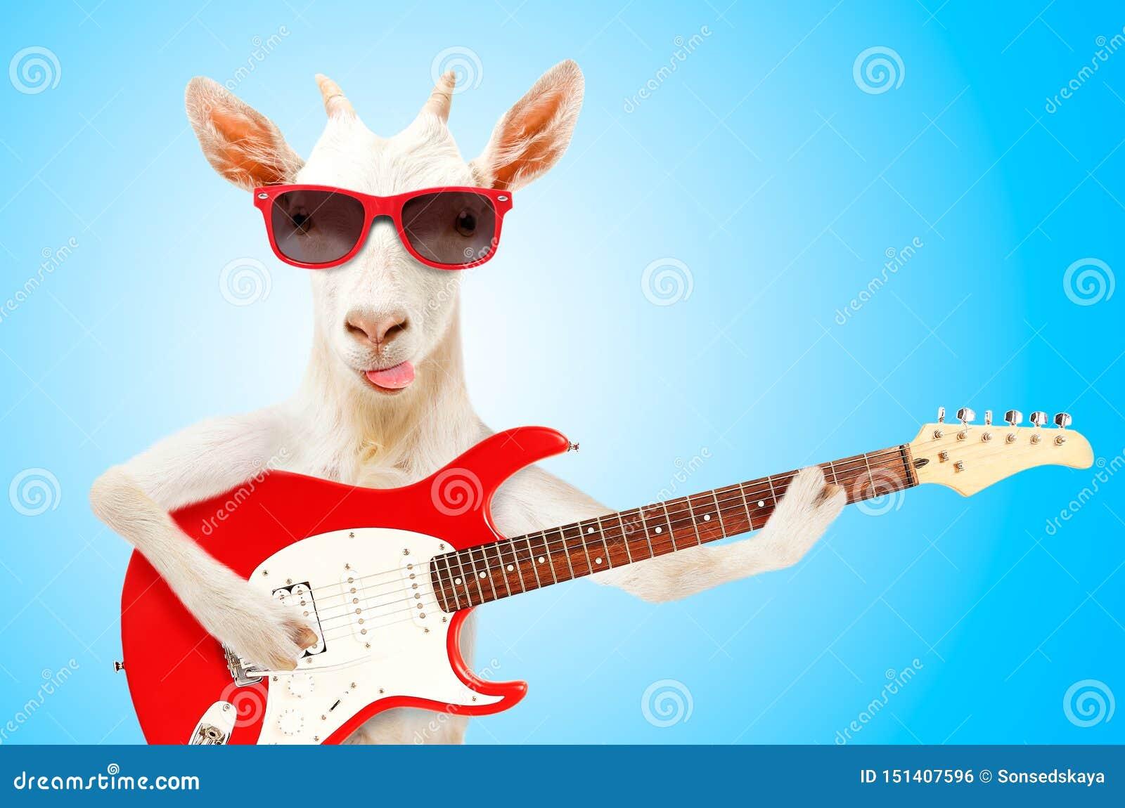 Cabra engra?ada nos ?culos de sol com guitarra el?trica
