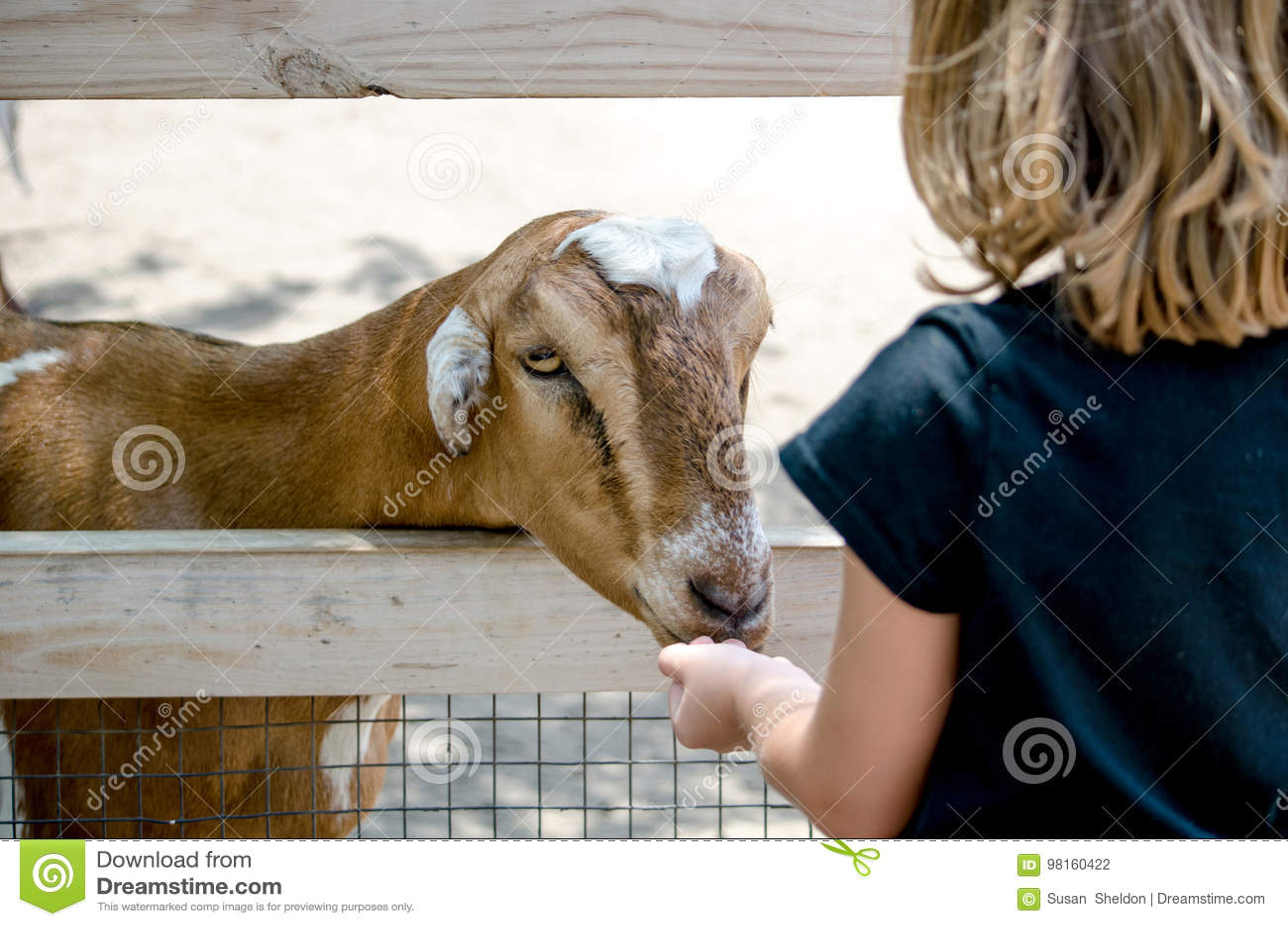 Cabra hambrienta en un zoo-granja
