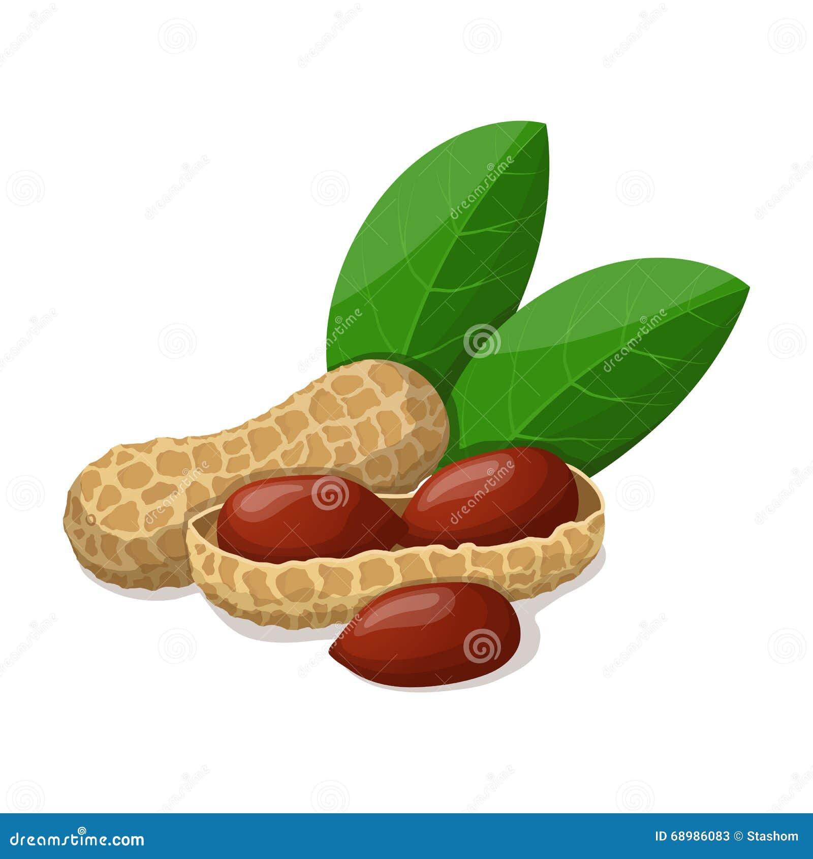 Cacahuetes con las hojas en blanco