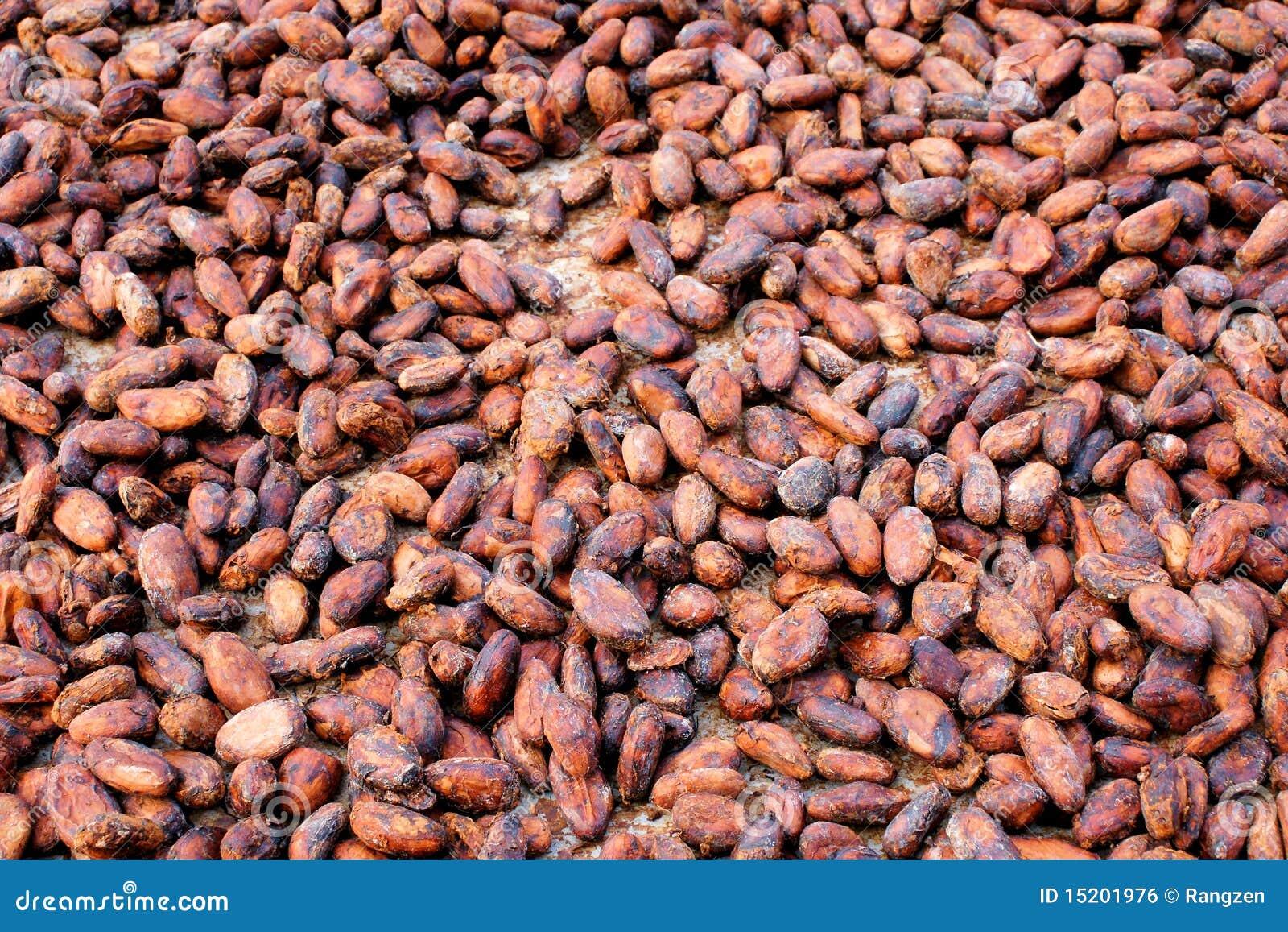 Cacao-habas