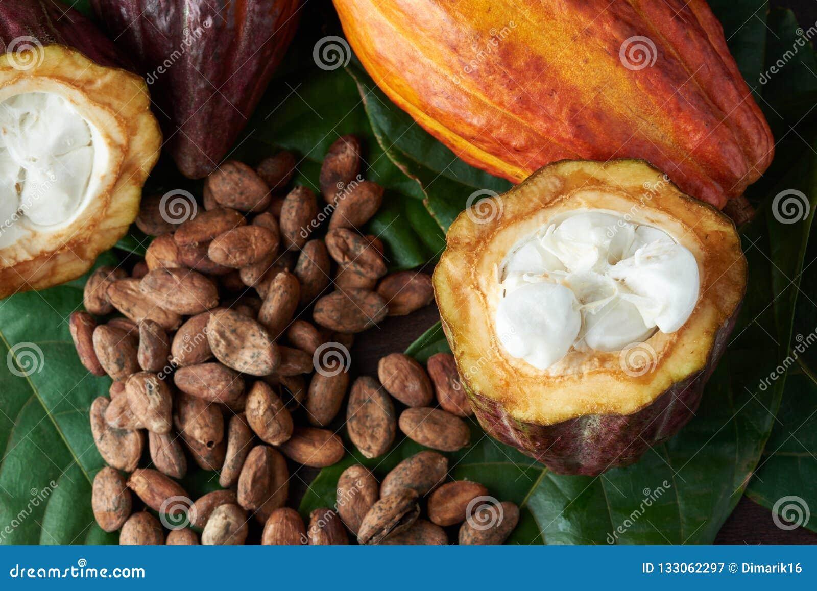 Cacao plant close-up