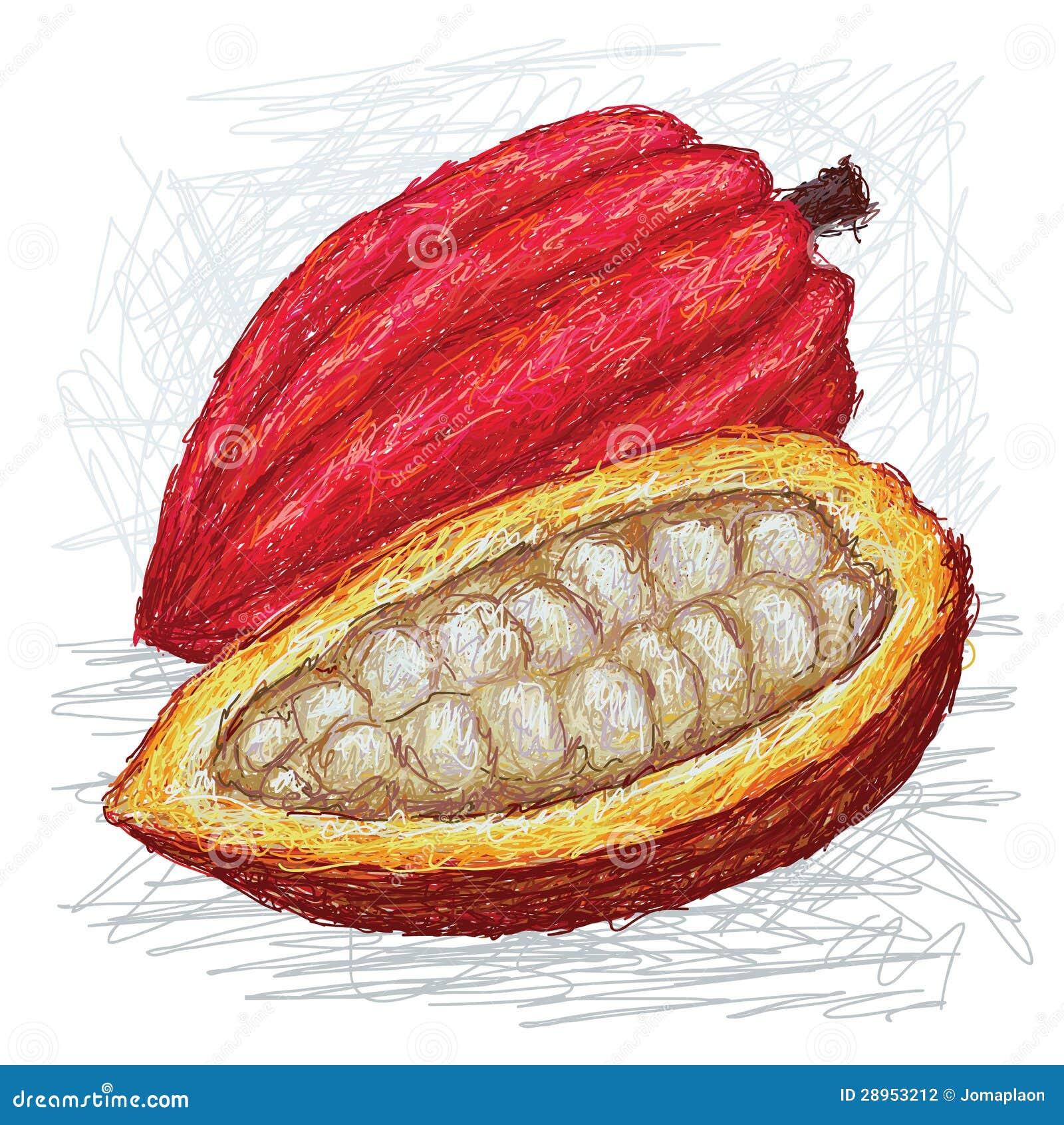 Cacao strąk otwierający