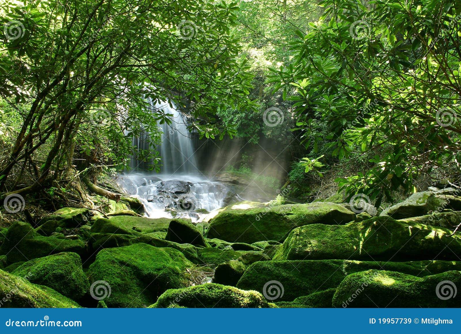 Cachoeira escondida da floresta tropical