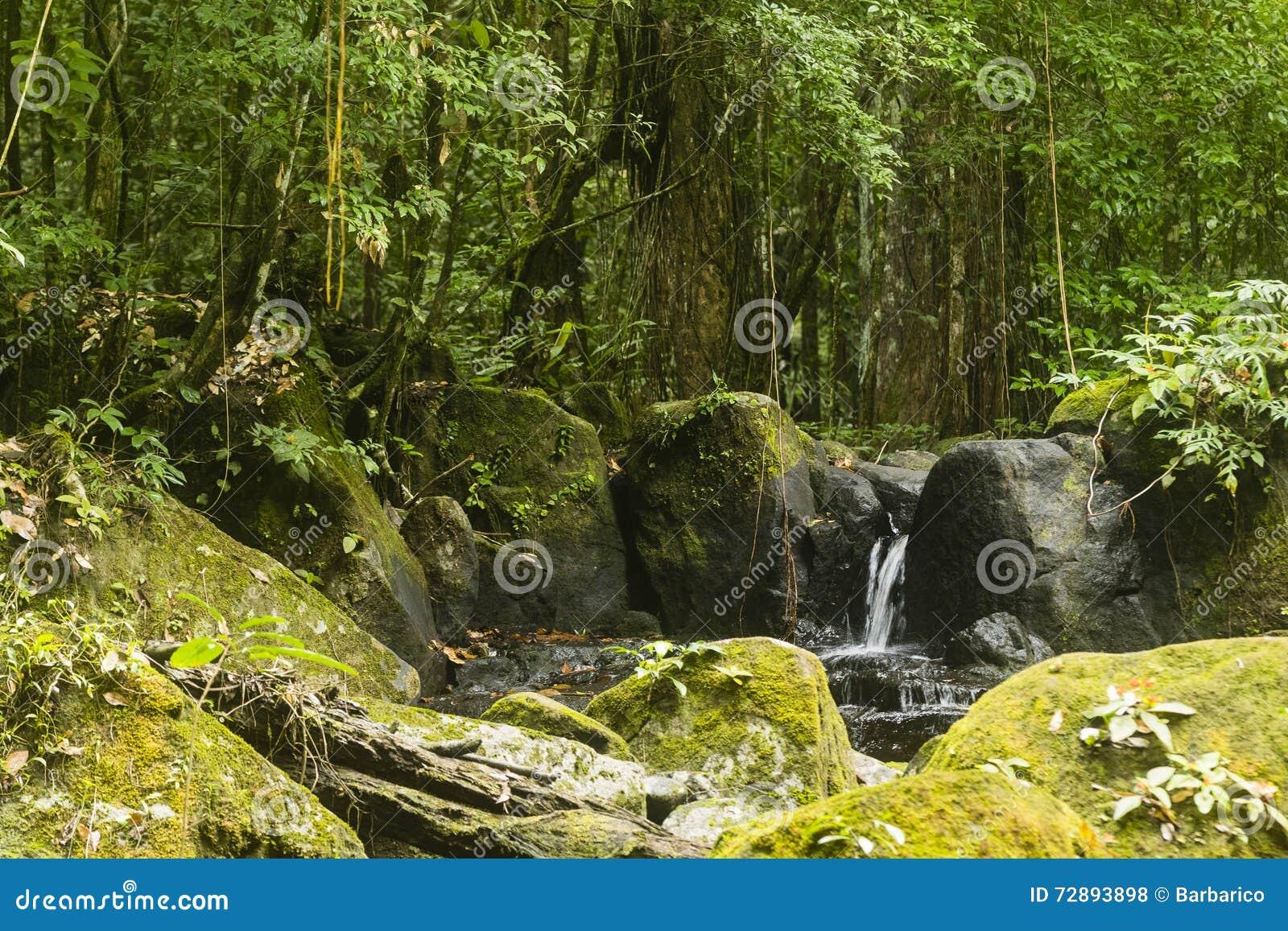 Cachoeira pequena na selva