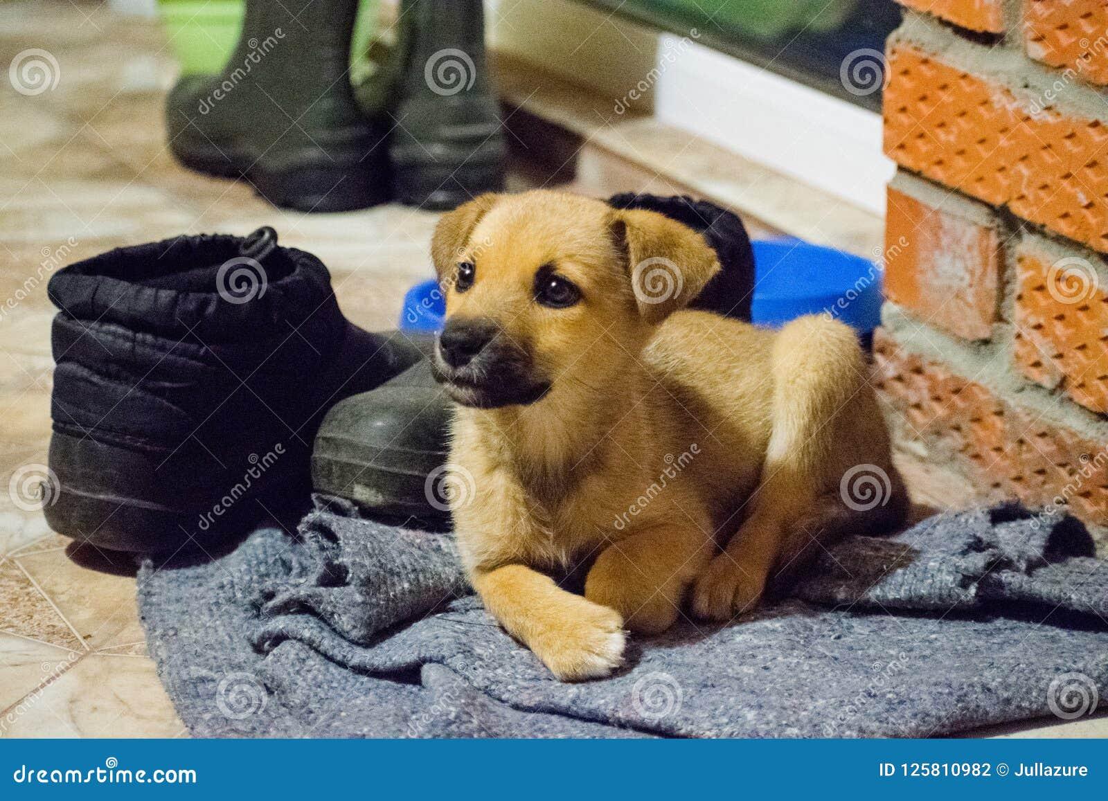 Cachorrinho bonito que olha a câmera, close up, foco seletivo Cachorrinho - retrato do cachorrinho bonito