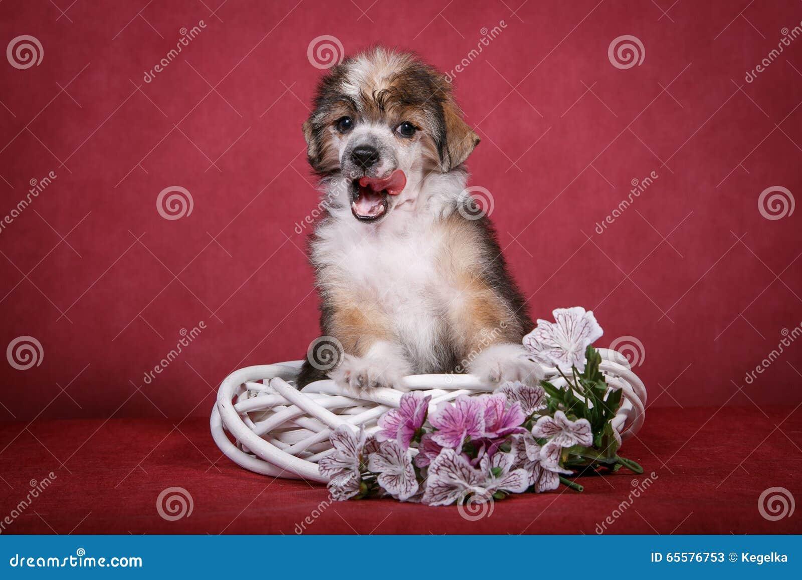 Cachorrinho com crista chinês do cão em uma grinalda branca com flores