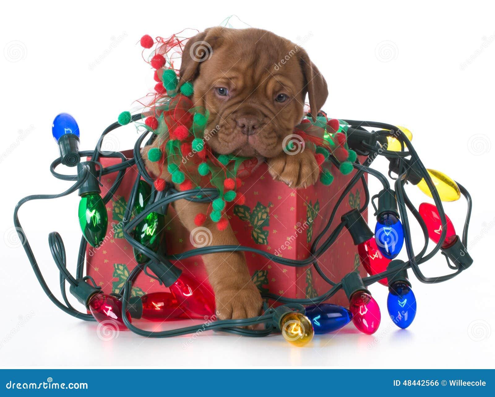 Cachorrinho do Natal