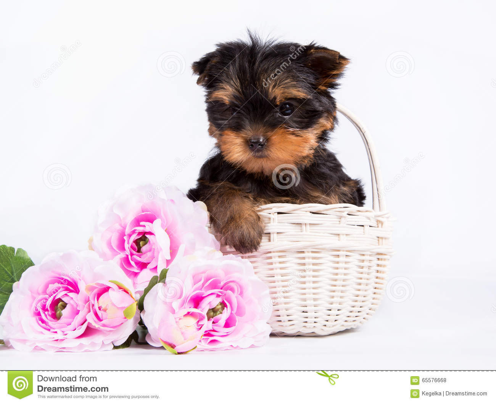 Cachorrinho do yorkshire terrier em uma cesta branca com um ramalhete de flores cor-de-rosa