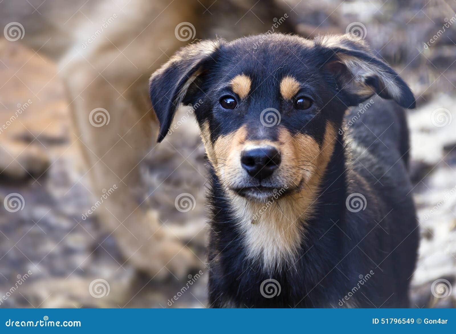 Cachorrinho em um abrigo para cães desabrigados
