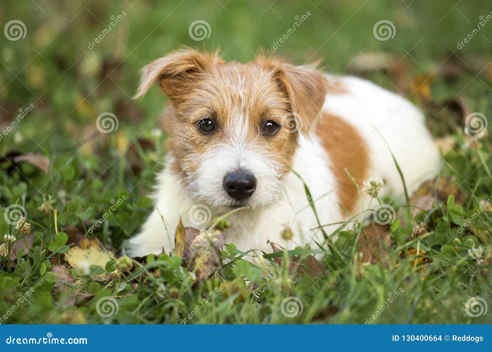 Cachorrinho feliz bonito do cão de estimação que espera na grama
