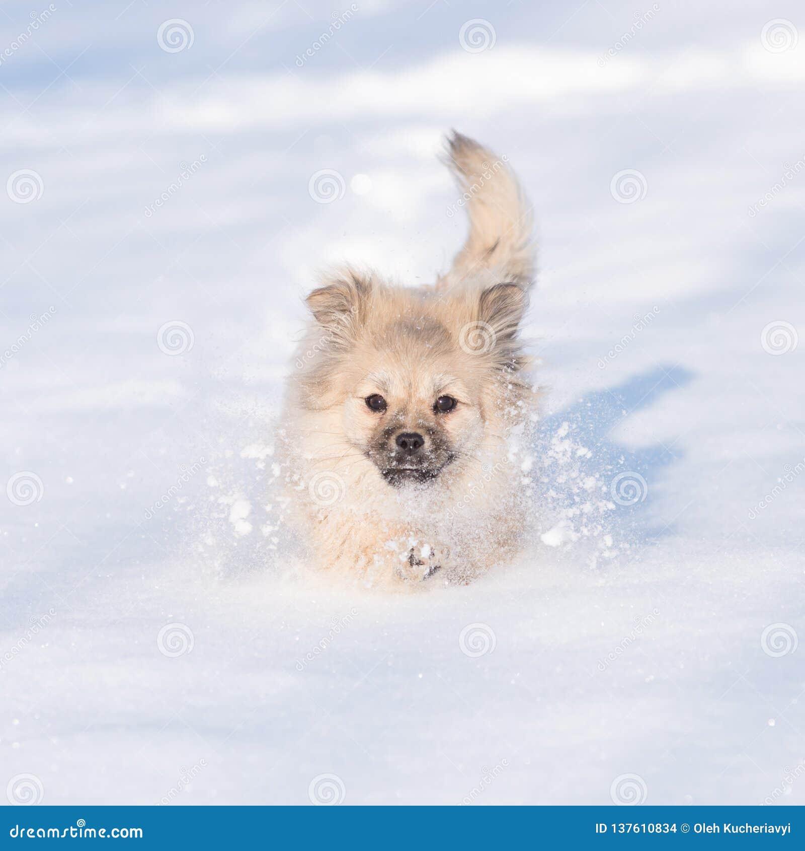 Cachorrinho na neve no inverno