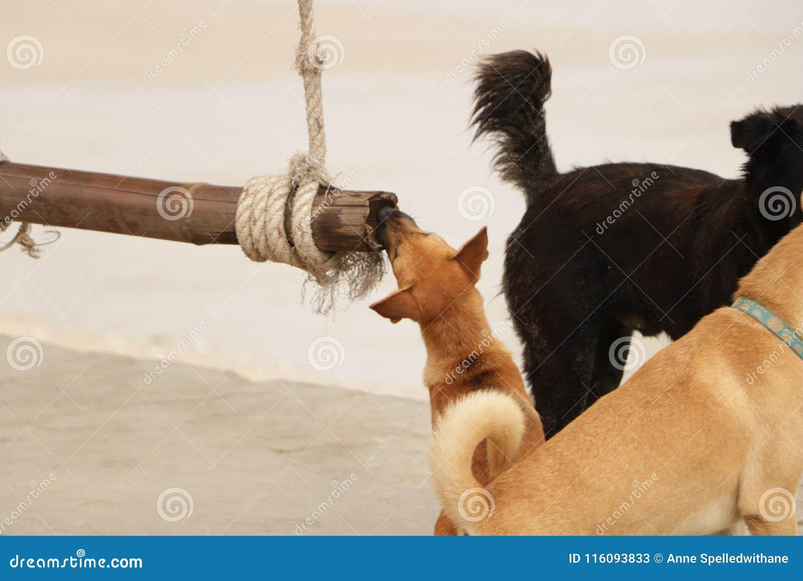 Cachorrinho pequeno bonito que mastiga o fazer logon a praia
