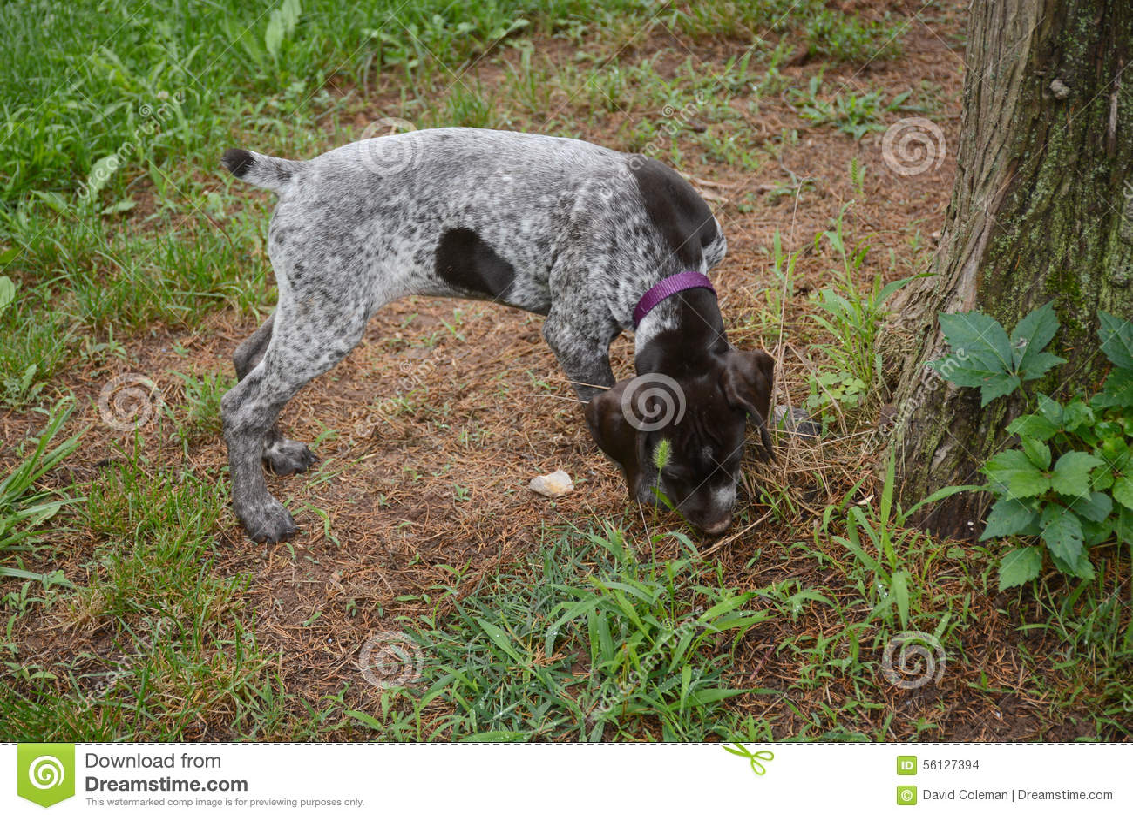 Cachorrinho que aspira a terra