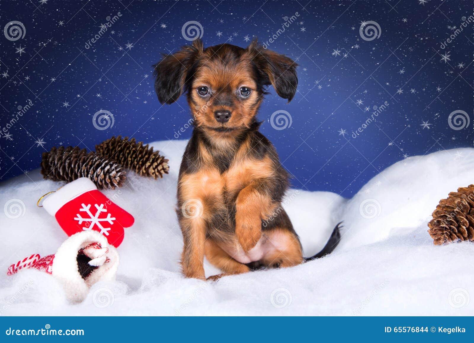 Cachorrinho ruivo do terrier de brinquedo