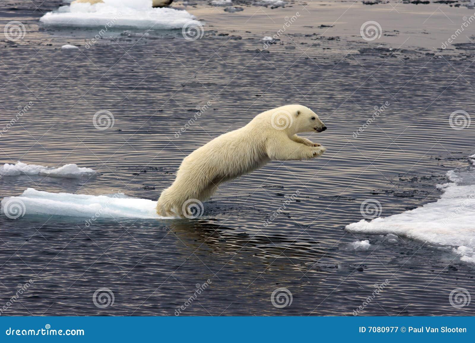 Cachorro de salto del oso polar