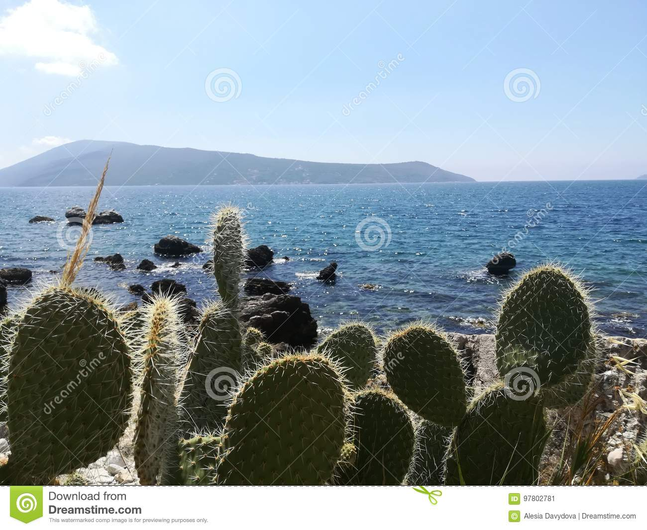 Cacti on the background of the sea and mountains.