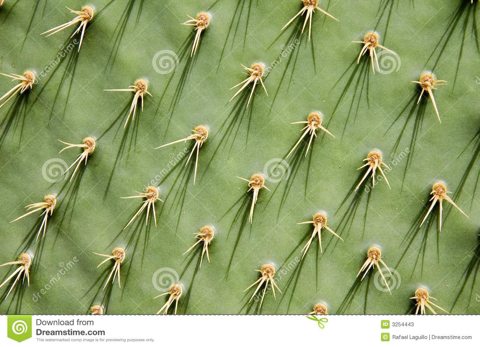 Cacto de pera espinoso