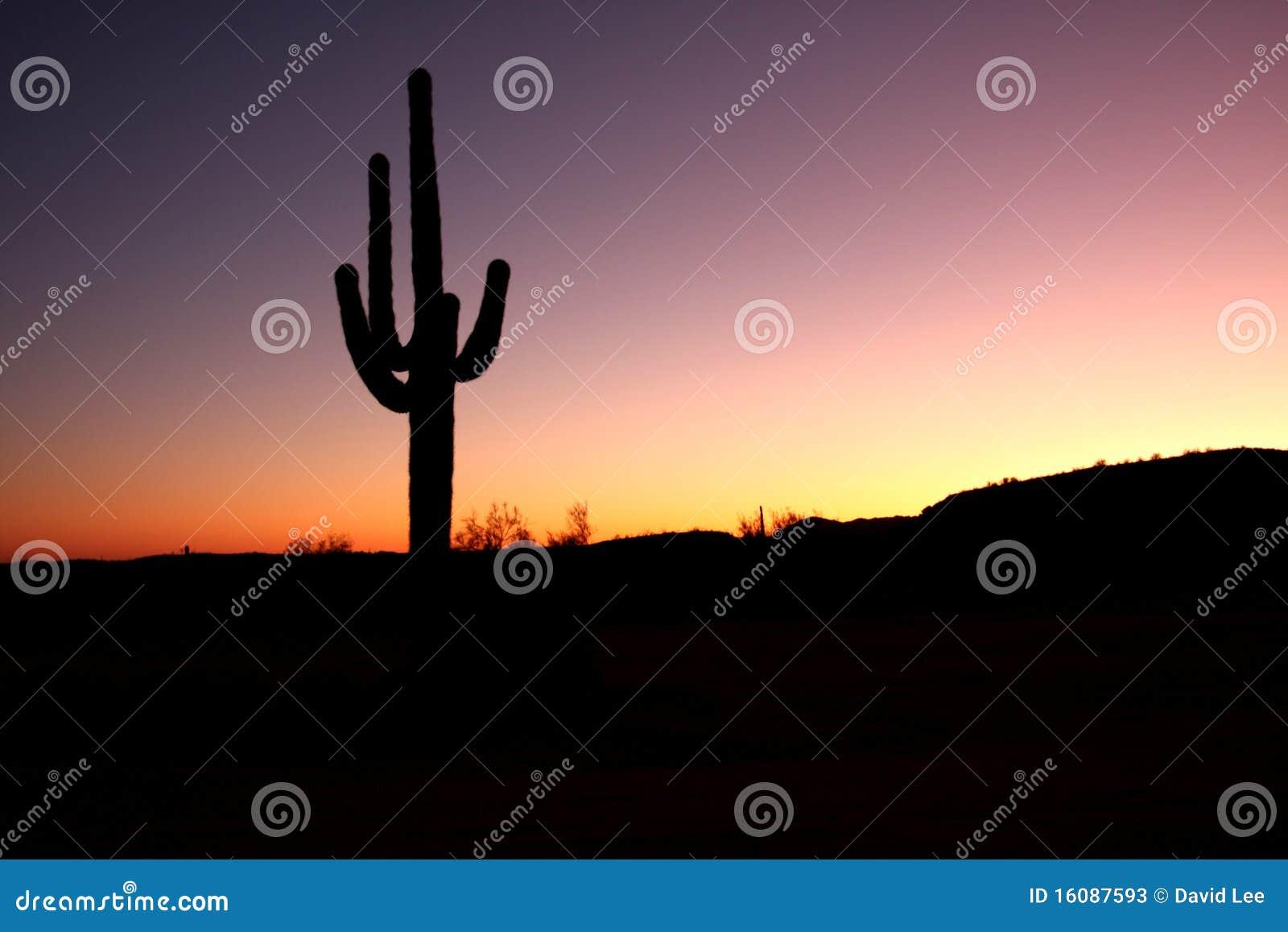 Cacto do Saguaro isolado no por do sol
