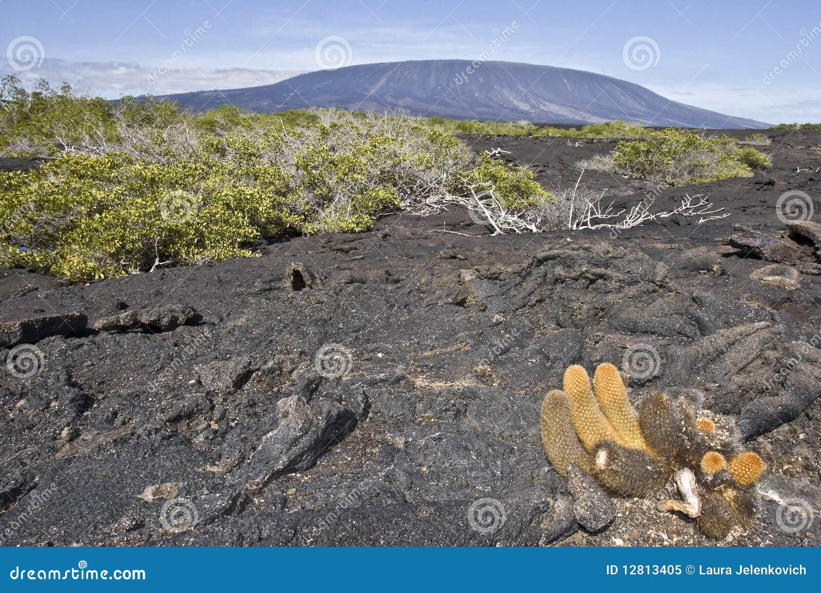 Cacto e vulcão da lava
