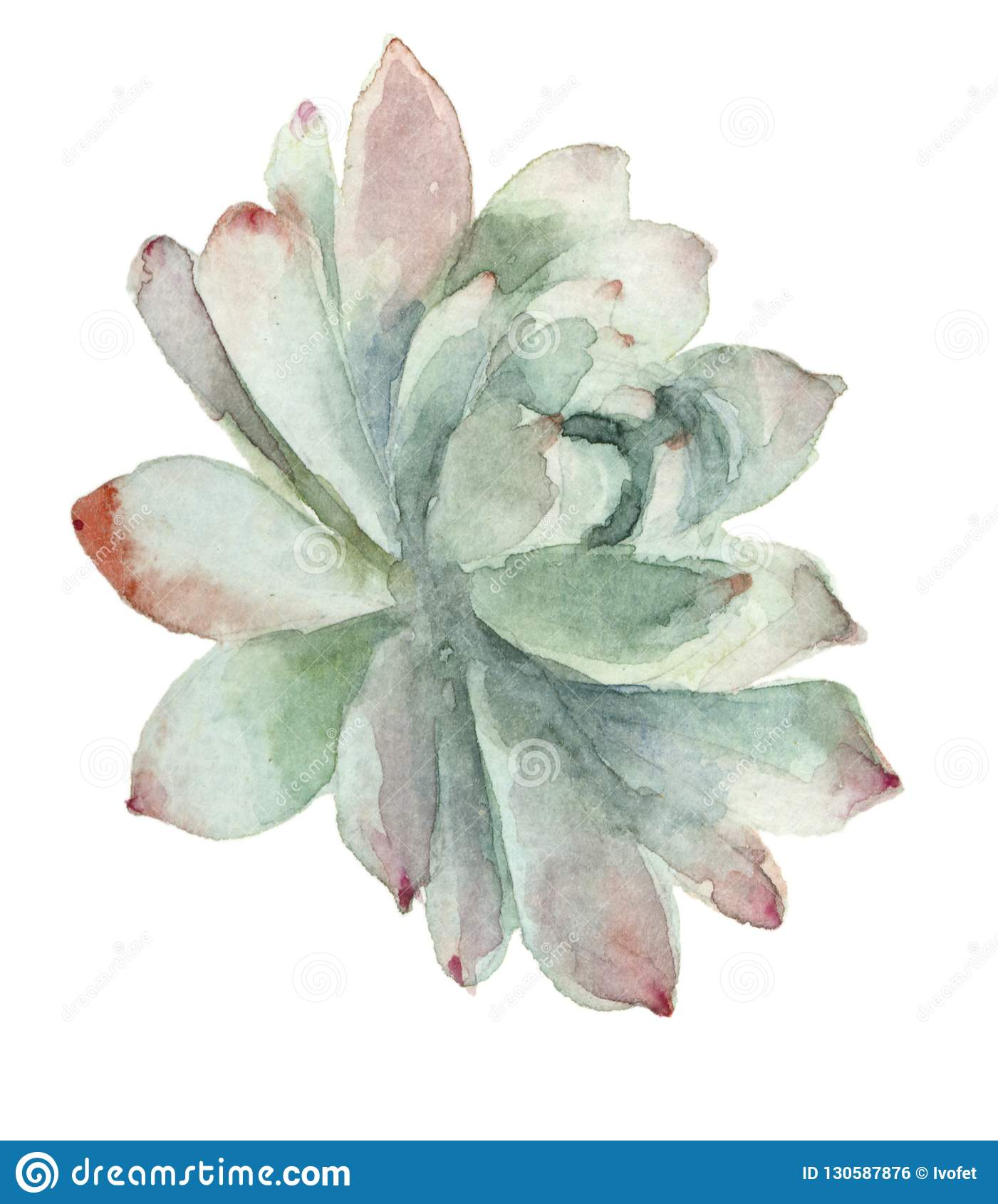 Cacto na flor