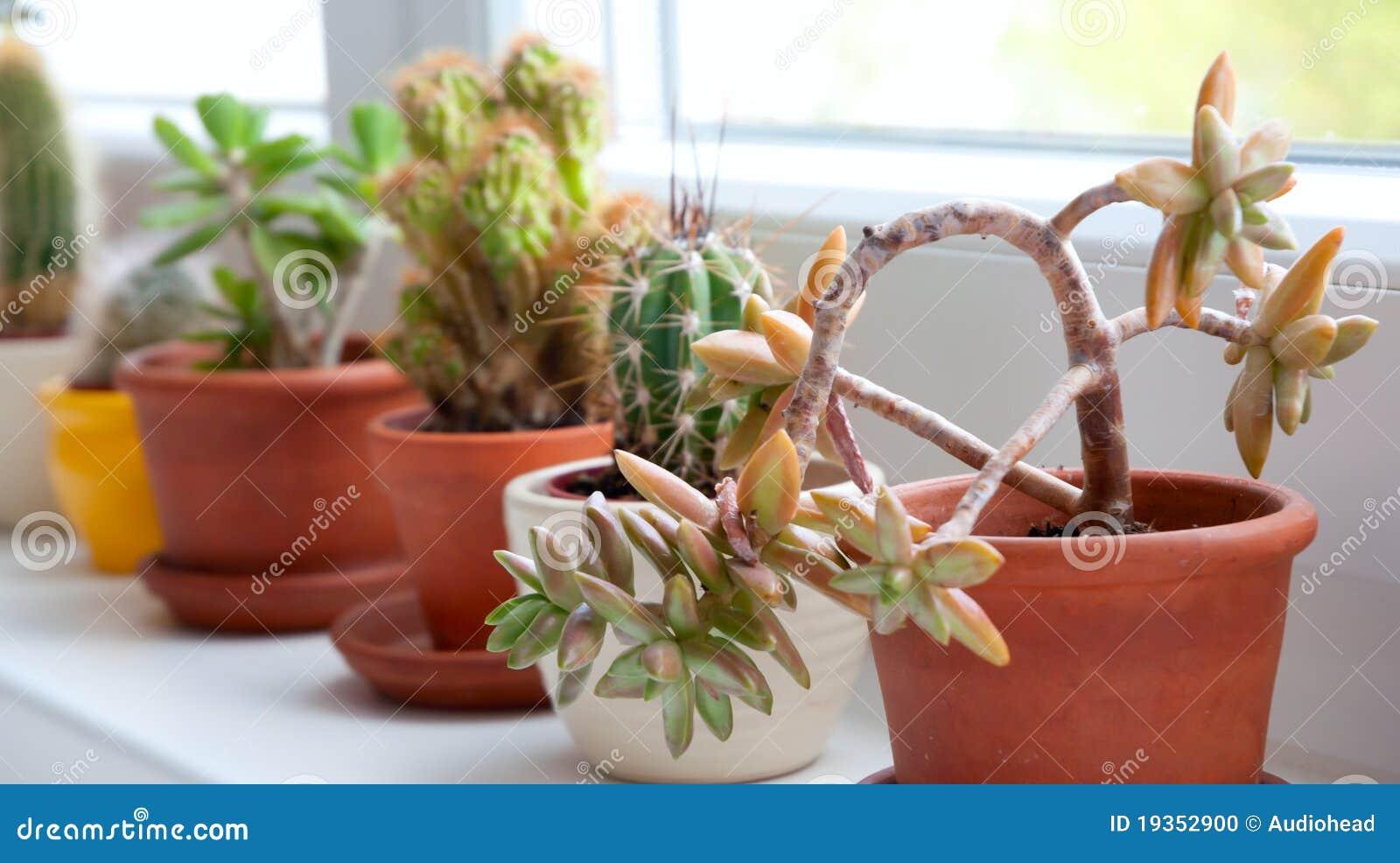 Cactos e Succulents