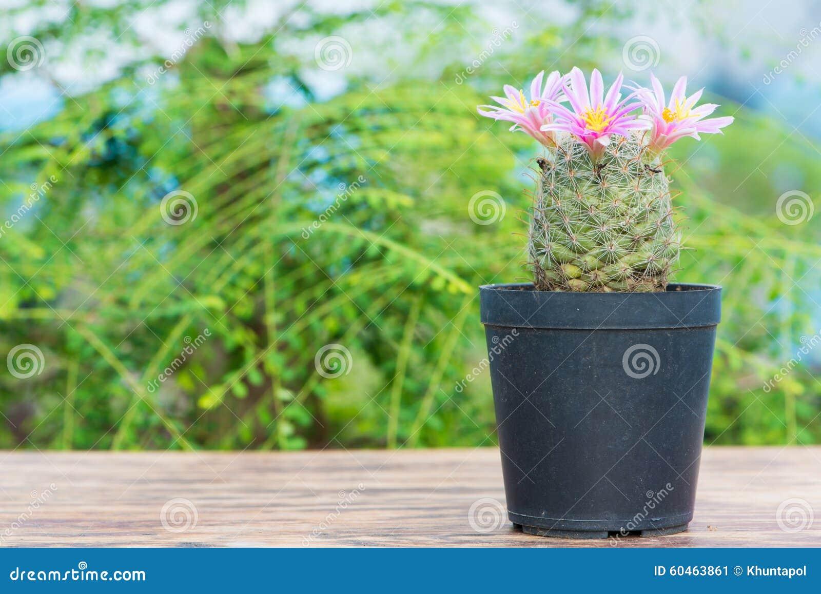 Cactus Avec La Fleur Rose Dans Le Pot De Fleur Image Stock Image